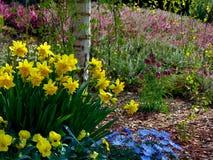 Foto macra con un fondo decorativo de la primavera que florece las flores hermosas en diseño del paisaje Imagen de archivo libre de regalías