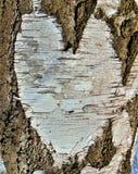 Foto macra con un fondo natural de un modelo abstracto del corazón del abedul de la corteza de árbol Imagen de archivo libre de regalías