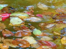 Foto macra con una textura decorativa del fondo de flores y de hojas caidas pétalos de árboles en la fuente del jardín del agua Fotos de archivo