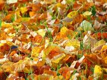 Foto macra con una textura decorativa del fondo de las hojas caidas de los árboles del otoño Fotografía de archivo