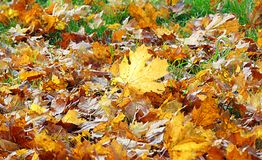 Foto macra con una textura decorativa del fondo de las hojas caidas de los árboles del otoño Imagenes de archivo