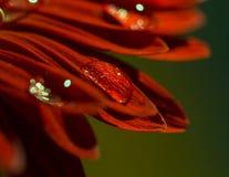 Foto macra de la flor Fotos de archivo libres de regalías