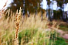 Foto macra de la hierba Fotografía de archivo libre de regalías