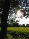 Foto macra de un paisaje con un fondo decorativo de la hora de la tarde entre la puesta del sol Foto de archivo