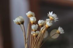 Foto macra de una flor Imagenes de archivo