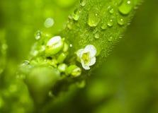 Foto macra de una flor con descensos de rocío Imágenes de archivo libres de regalías