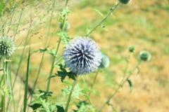Foto macra de una flor violeta con el fondo verde fotos de archivo libres de regalías