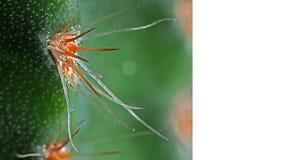 Foto macra del cactus espinoso con el espacio para el texto imagen de archivo libre de regalías