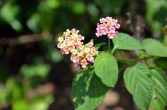 Foto macra del detalle del pequeño arbusto de la planta floreciente Imagen de archivo libre de regalías