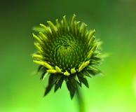 Foto macra estupenda de la flor Imagenes de archivo