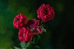 Foto macra para la abeja en una flor roja de la rosa Foto de archivo libre de regalías