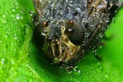 Foto macra una mosca foto de archivo