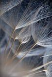 Foto macro abstrata de sementes da planta Imagem de Stock