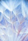 Foto macro abstrata de sementes da planta em uma manhã Imagens de Stock