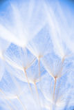 Foto macro abstrata de sementes da planta em uma manhã Foto de Stock