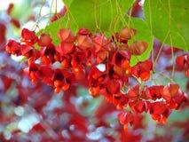 Foto macro com as caixas decorativas de um fundo da textura das sementes nos ramos das árvores do jardim Fotos de Stock