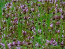 Foto macro com as flores selvagens selvagens de um fundo decorativo da textura de plantas herbáceas Imagem de Stock Royalty Free