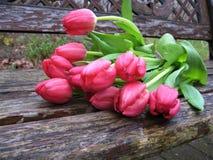 Foto macro com fundo decorativo de flores bonitas da planta herbácea das tulipas com as pétalas da cor cor-de-rosa suculenta nas  Imagens de Stock