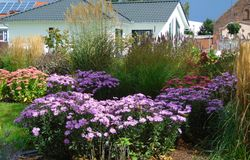 Foto macro com fundo decorativo de flores brilhantes bonitas no período de florescência do outono Fotografia de Stock