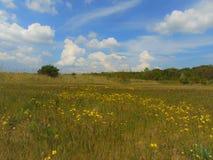 Foto macro com um contexto decorativo da paisagem de pastagem rurais e vegetação no verão um o dia ensolarado morno Imagem de Stock Royalty Free