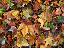 Foto macro com um fundo decorativo de máscaras vívidas caídas da cor do outono Imagem de Stock
