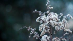 Foto macro das flores brancas fotos de stock royalty free