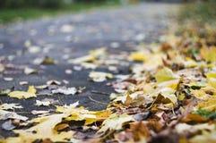 Foto macro das folhas de outono caídas na estrada asfaltada que vai para a frente, foco raso, foco seletivo Fotos de Stock