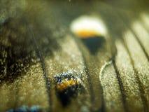 Foto macro de uma asa da borboleta Foto de Stock