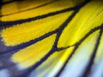 Foto macro de uma asa da borboleta Fotos de Stock