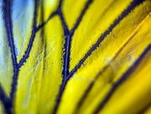 Foto macro de uma asa da borboleta Foto de Stock Royalty Free
