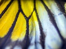 Foto macro de uma asa da borboleta Fotografia de Stock