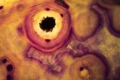 Foto macro de uma fatia alaranjada e roxa da rocha da ágata Fotos de Stock