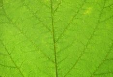 Foto macro de uma textura da folha Imagens de Stock
