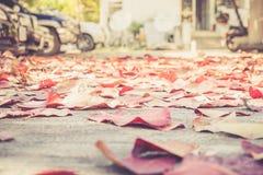 Foto macro do folhas caídas Imagens de Stock