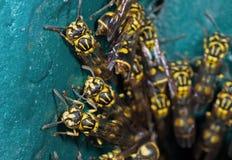 Foto macro do grupo de vespas no assoalho de turquesa fotografia de stock