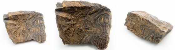 Foto macro dos stromatolites Fotografia de Stock