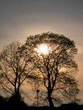 Foto med landskapbakgrund av solnedgången i tidig vår med konturer av svarta träd Royaltyfria Foton