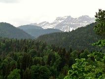 Foto med landskapbakgrund i olika skuggor av den gröna skogen i de Kaukasus bergen Arkivbilder