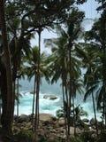 Foto med palmträd Arkivbilder