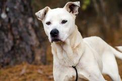 Foto mezclada blanca de la adopción del perro de la raza, Walton County Animal Control Imagen de archivo