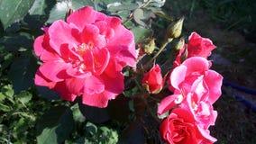 Foto mit natürlicher Leuchte und schönem bokeh Lizenzfreie Stockfotos