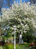 Foto mit schönen Bäumen des blühenden Gartens des Frühlinges der weißen Blumen für Landschaft entwerfen Stockfotos