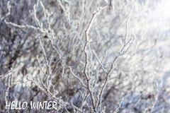 Foto mit Texthallo Winter Russland, UralJanuary, Temperatur -33C Fahne mit Text Hallo Winter Winter stockfotos