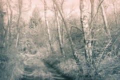 Foto monocromática artística de una trayectoria dentro de un bosque profundo Fotografía de archivo