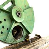 A foto mostra a colmeia, favo de mel da cera Fotografia de Stock Royalty Free