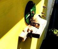 A foto mostra a colmeia, favo de mel da cera Fotos de Stock Royalty Free