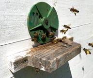 A foto mostra a colmeia, favo de mel da cera Foto de Stock Royalty Free