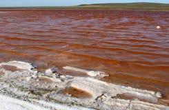 A foto natural da paisagem do lago fantástico Kayashskoe em Crimeia, na costa do Mar Negro com naturalmente aumentou água salgado imagem de stock