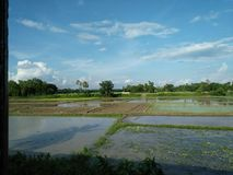 foto natural de Bangladesh Fotos de archivo