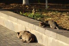 Foto nova dispersa de Cat Photographer, caminhadas de gato pequenas do tigre a um cão imagem de stock royalty free